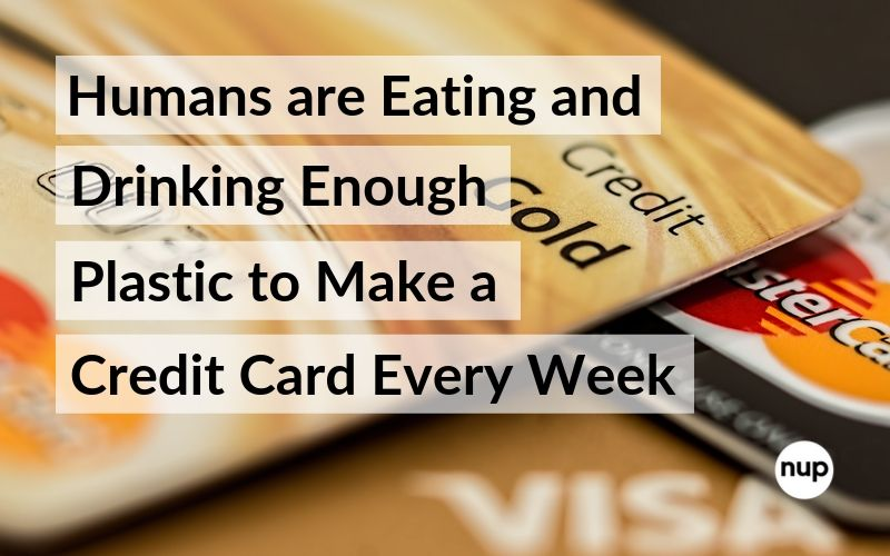 humans eating credit card every week worth of microplastics nup living blog
