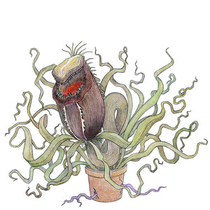 The Jolly Nepenthes