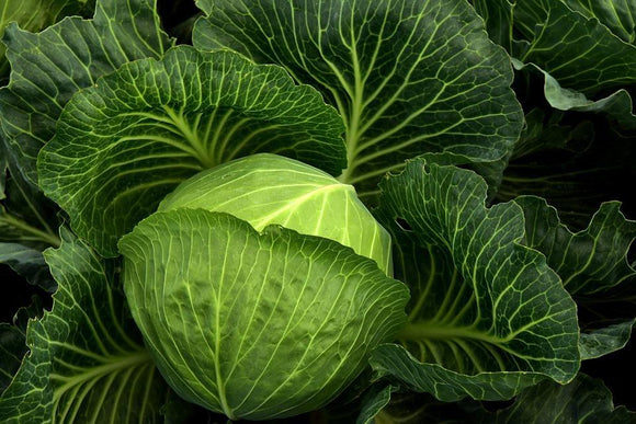 Green Cabbage (1 head)