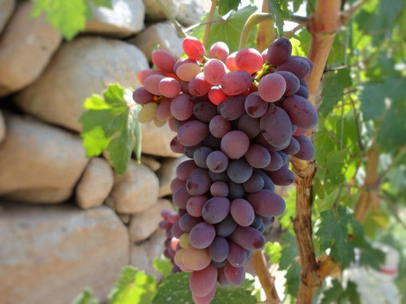 Red Grapes (1 bunch)