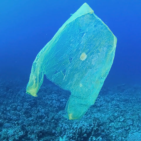 Plastic Bag in the Ocean looking a lot like a jellyfish