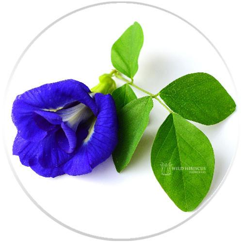 Flower Extract - b'Lure Butterfly Pea