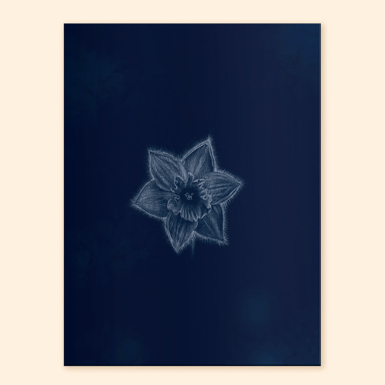 Ghost Daffodil Art Print