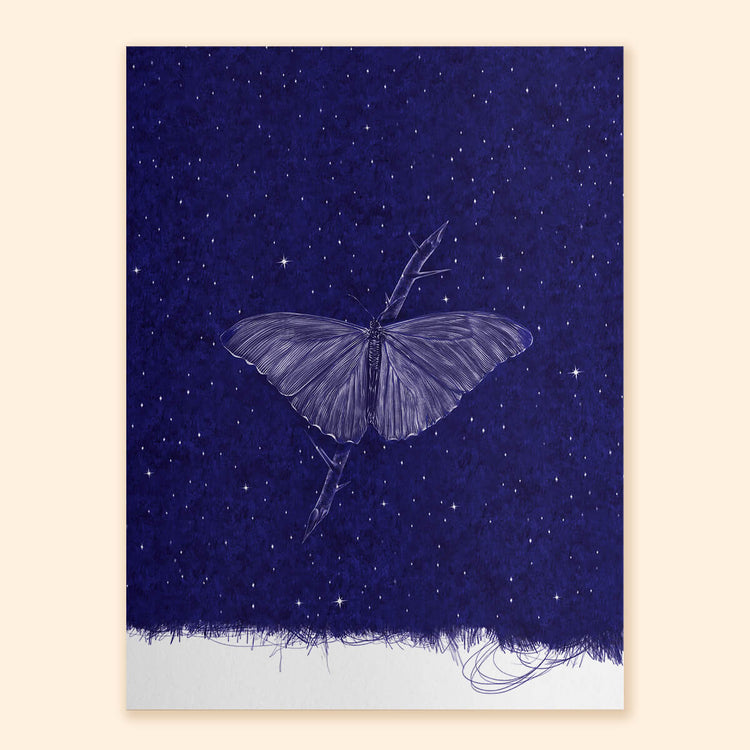 Butterfly Nocturne Art Print