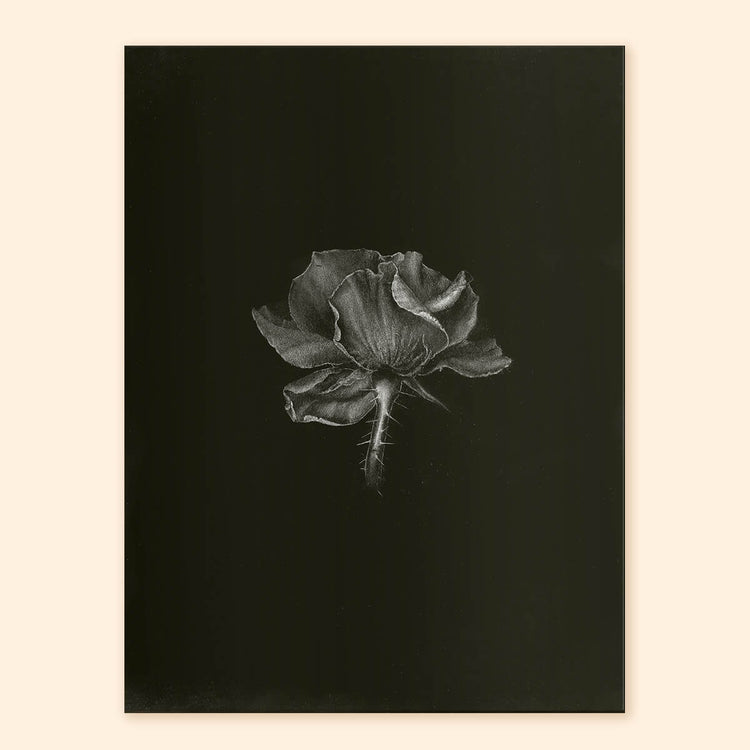 Quiet Flower Art Print