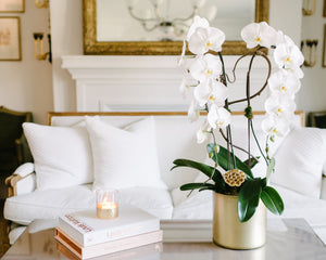 Orchids Subscription
