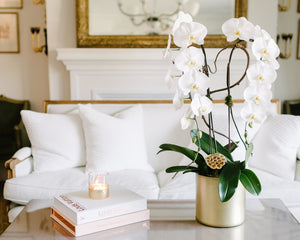 Cascading Orchid Plants