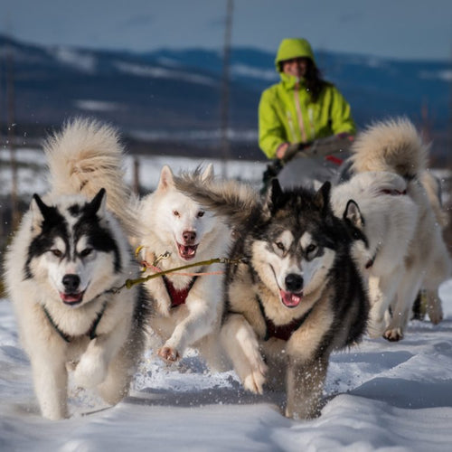 Montana Dogsled & X-Country Ski Feb 22-24th, 2019