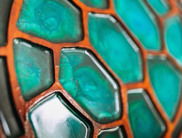 Ocean Turtle Shell | Earth & Ocean