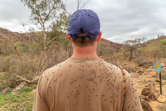 Help beat the flies out in the Australian Outback with these tips and tricks from Hema Maps
