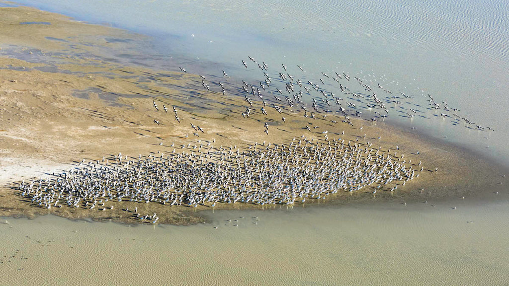 Lake Eyre birdwatching from above