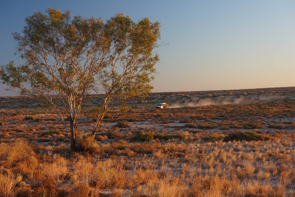 Once away from the flood-out area in these outer channels of the Warburton River, it was dusty and dry.
