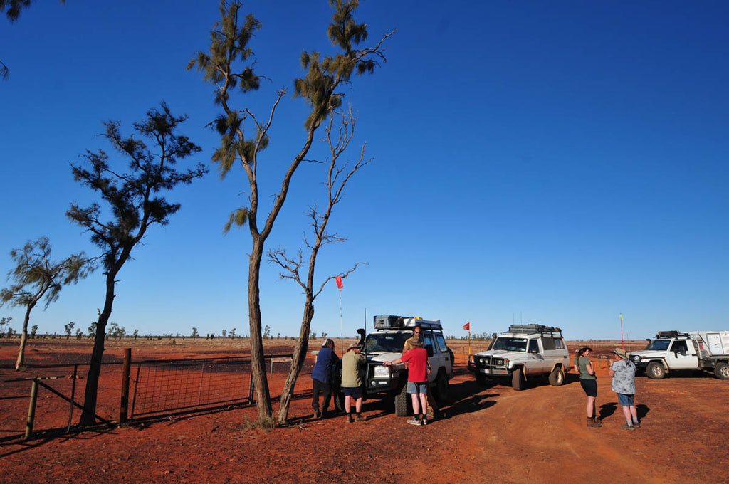 These Waddy trees are tough the Mac Clark Acacia Peuce Conservation Reserve