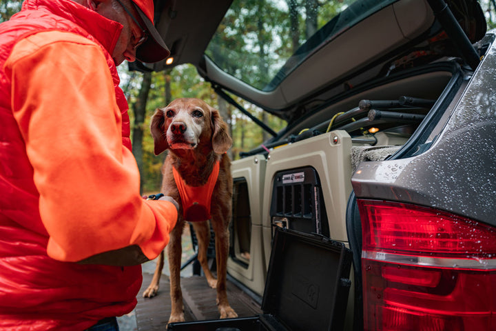 traveling with hunting dogs first aid health