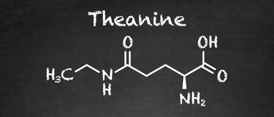 What is Theanine?