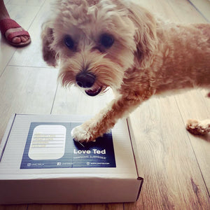 Pawsome Combo Box - Love Ted