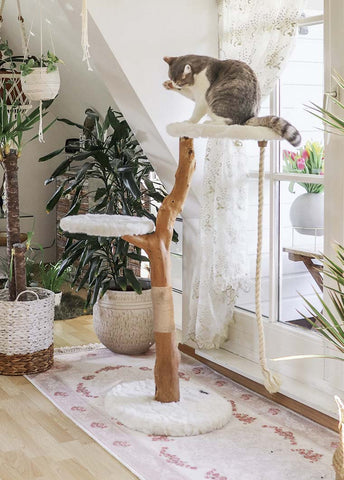 Shop All Cat Towers, Beds, and Caves