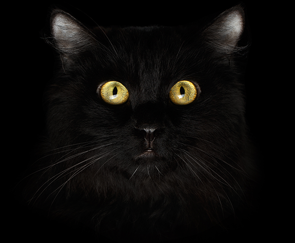 Can cats see in the dark. A blog by Mau Modern Cat Furniture | Cat Trees | Cat Towers | Cat Cave | Cat Bed