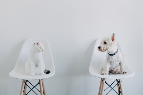 Cats vs dogs - cat furniture and trees