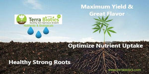 Healthy roots make all the difference | Terra Biotics