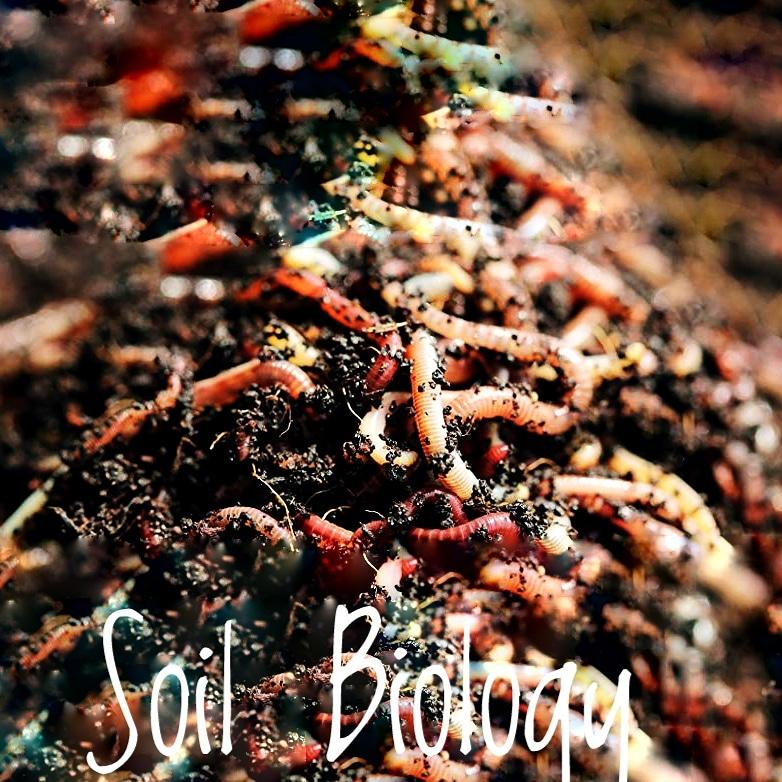 Soil Infusion - Terra Biotics