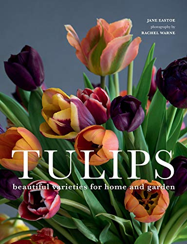 Tulips: Beautiful Varieties