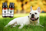 French Bulldog Essential Oils