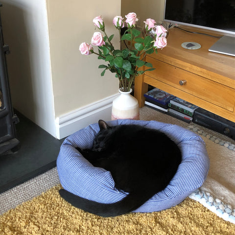 Charlie in his new blue stripy bed