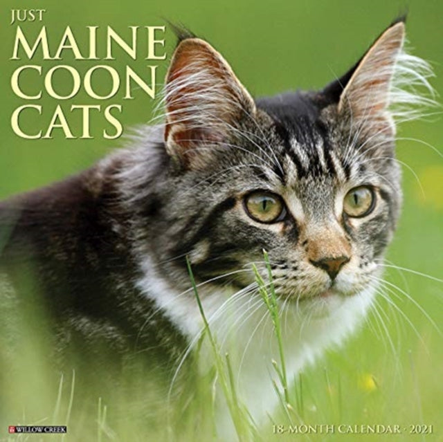 50% OFF Maine Coon Cats 2021 Wall Calendar