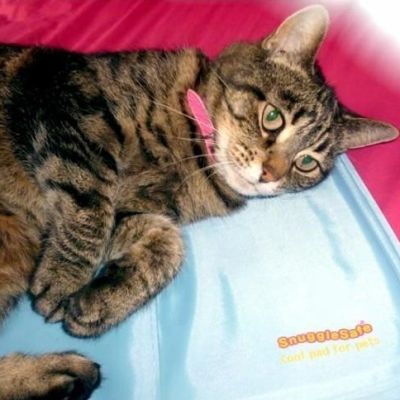 Snugglesafe Cool Pad to help keep your pet cool