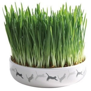 Ceramic Bowl and Cat Grass