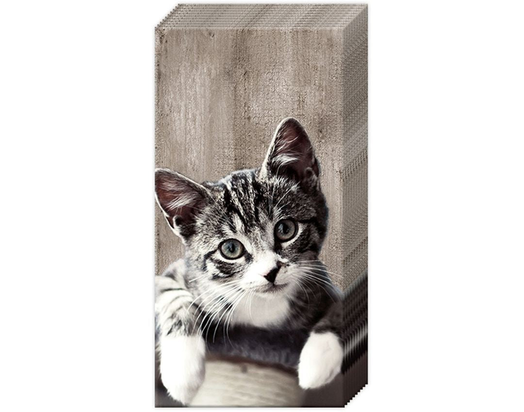 Tabby Cat Tissues