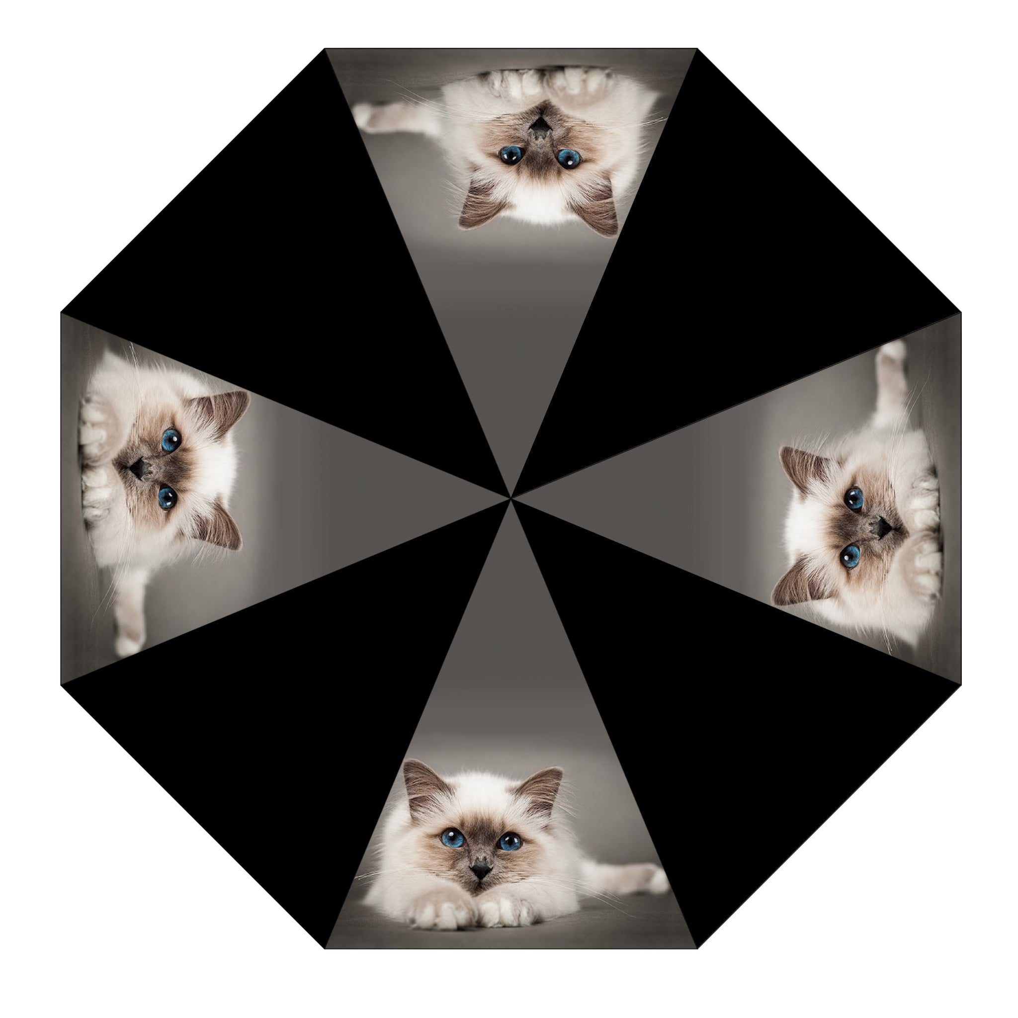 Birman Kitten Umbrella