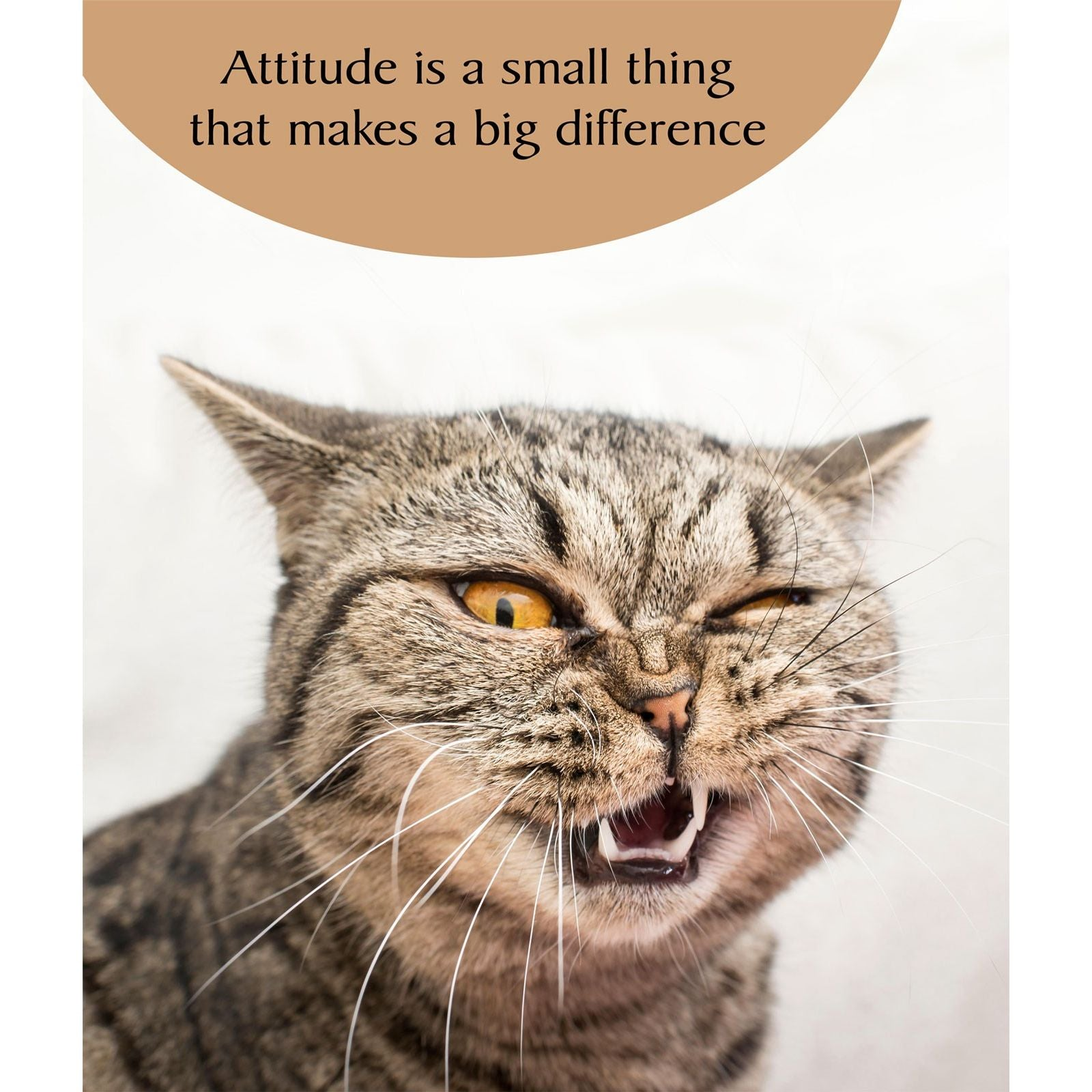 Portfolio Cat Tonic Attitude Cat Card