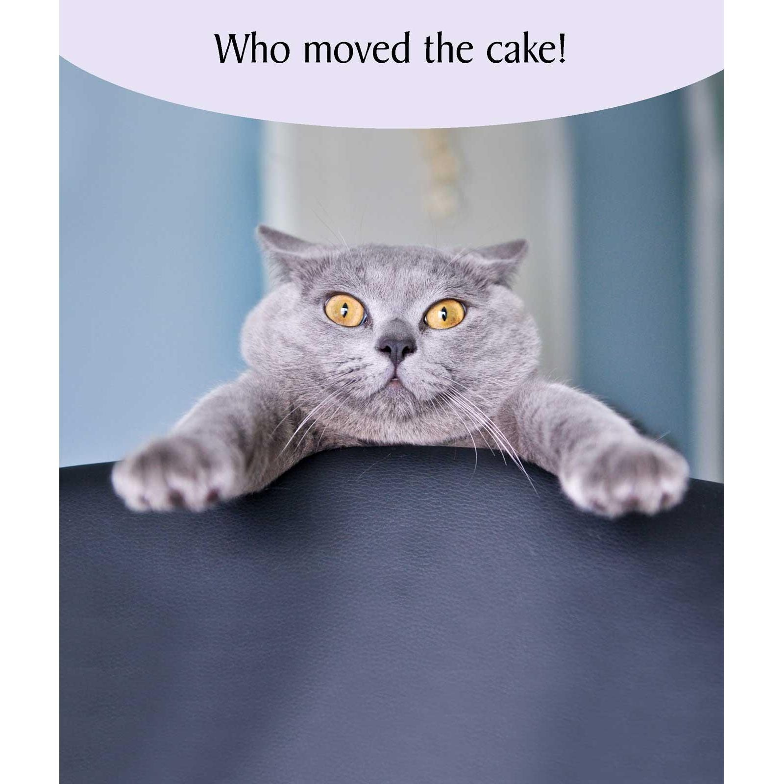 Portfolio Cat Tonic Who Moved the Cake Cat Card