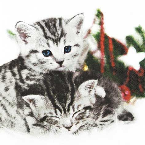 Christmas Cats Napkins
