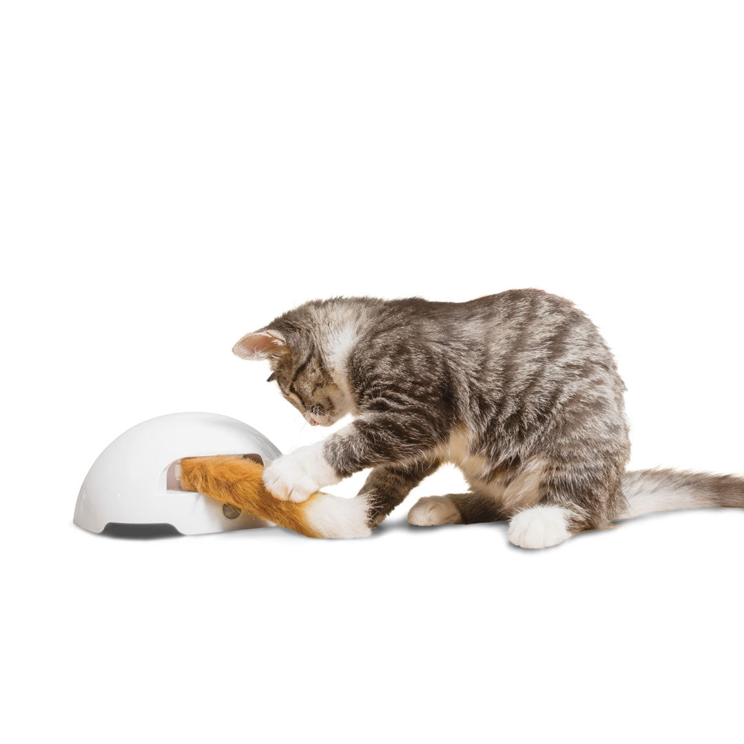 Fox Den Automatic Cat Toy