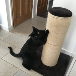 Fat Boy Scratching Post