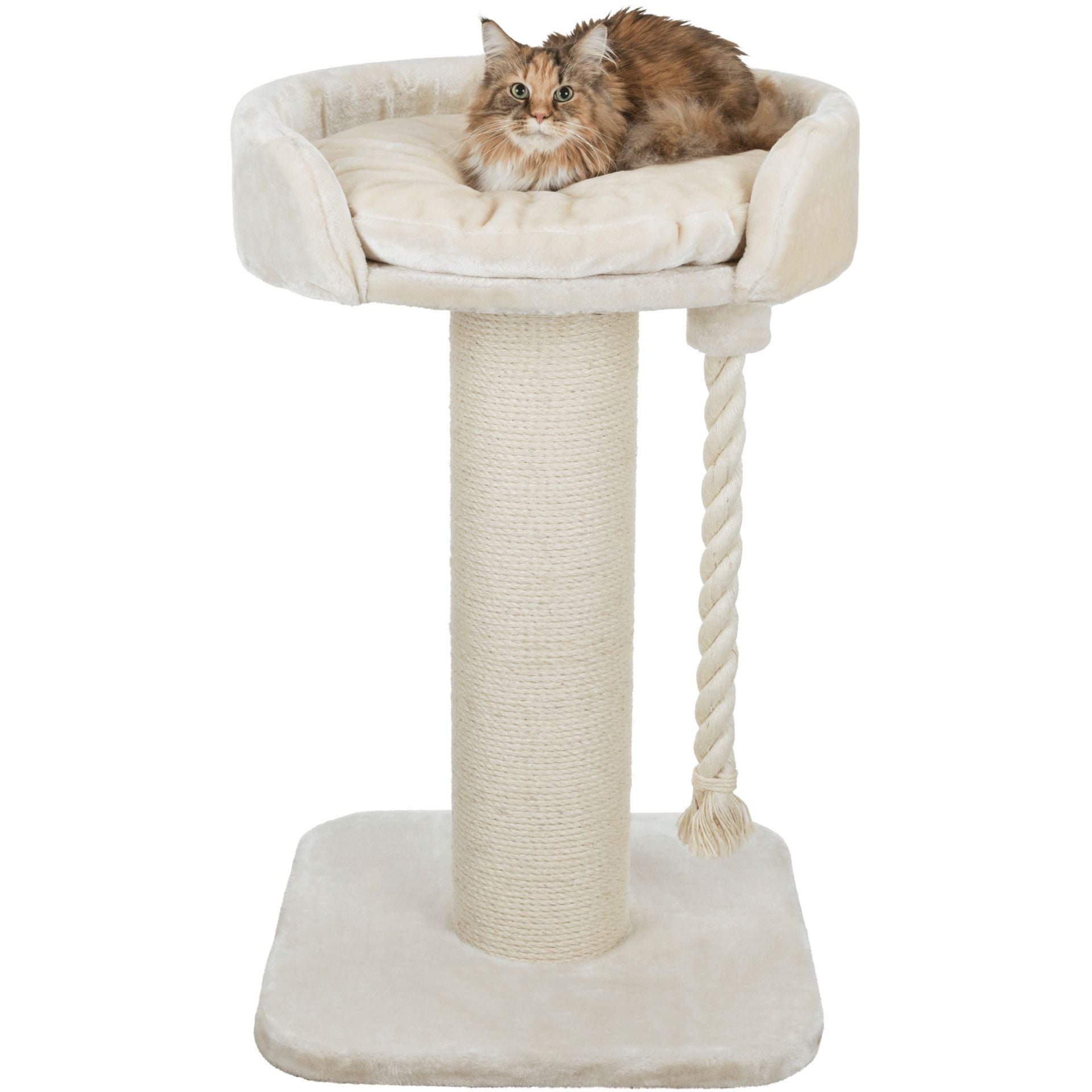 Picture of: Klara Xxl Scratching Post Bed For Larger Cats The Cat Gallery