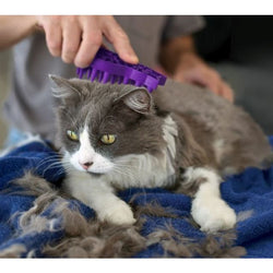 KONG Cat Zoom Groom Brush and Massager