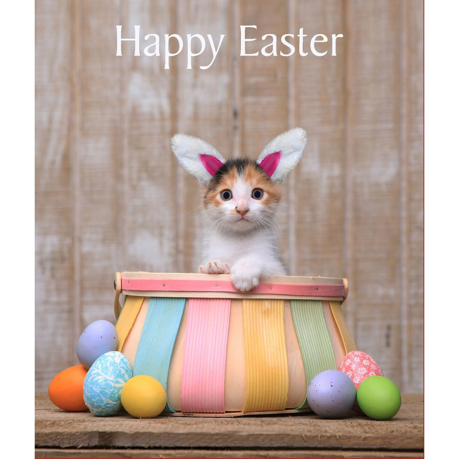 Happy Easter Cat Card