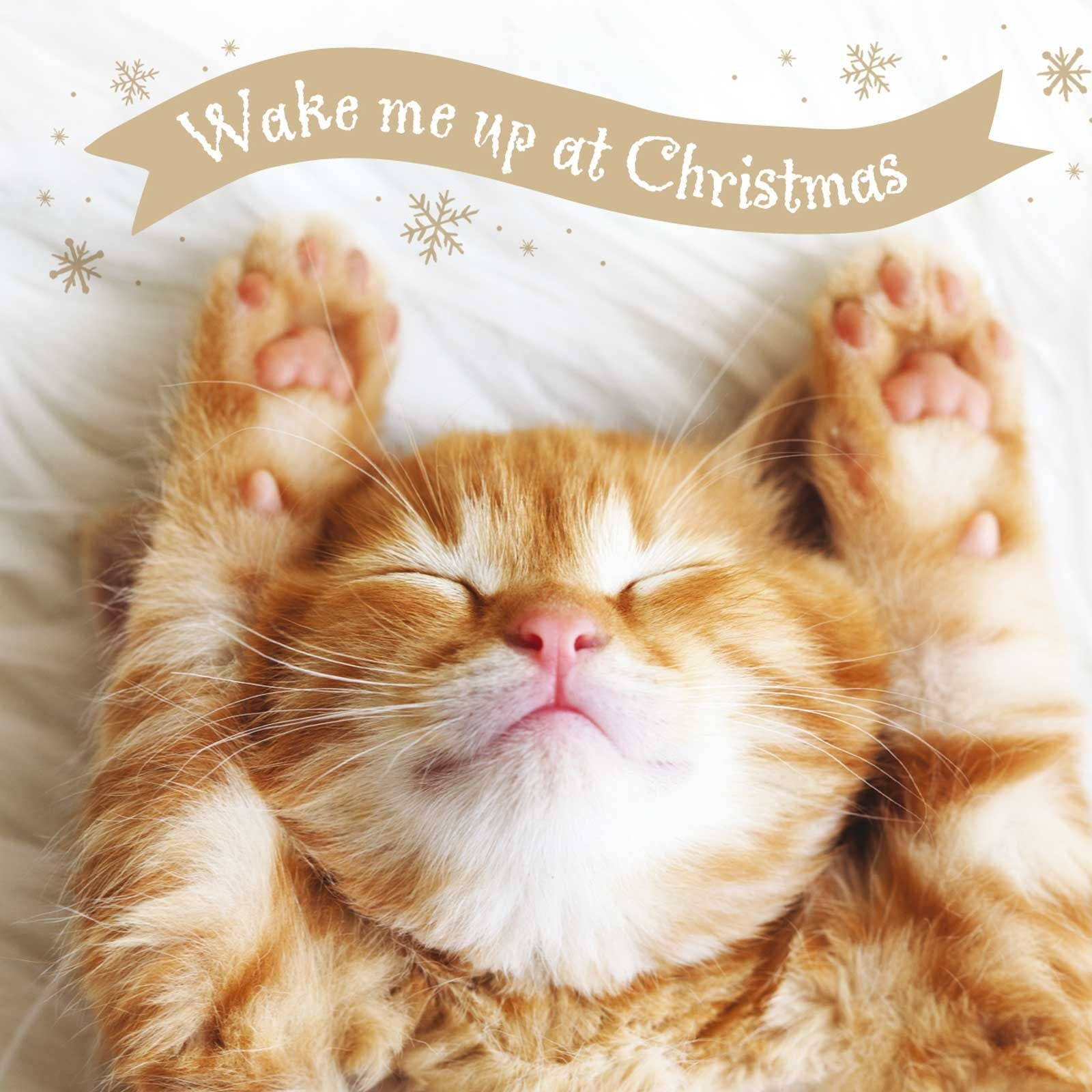 Wake Me Up at Christmas Charity Cards