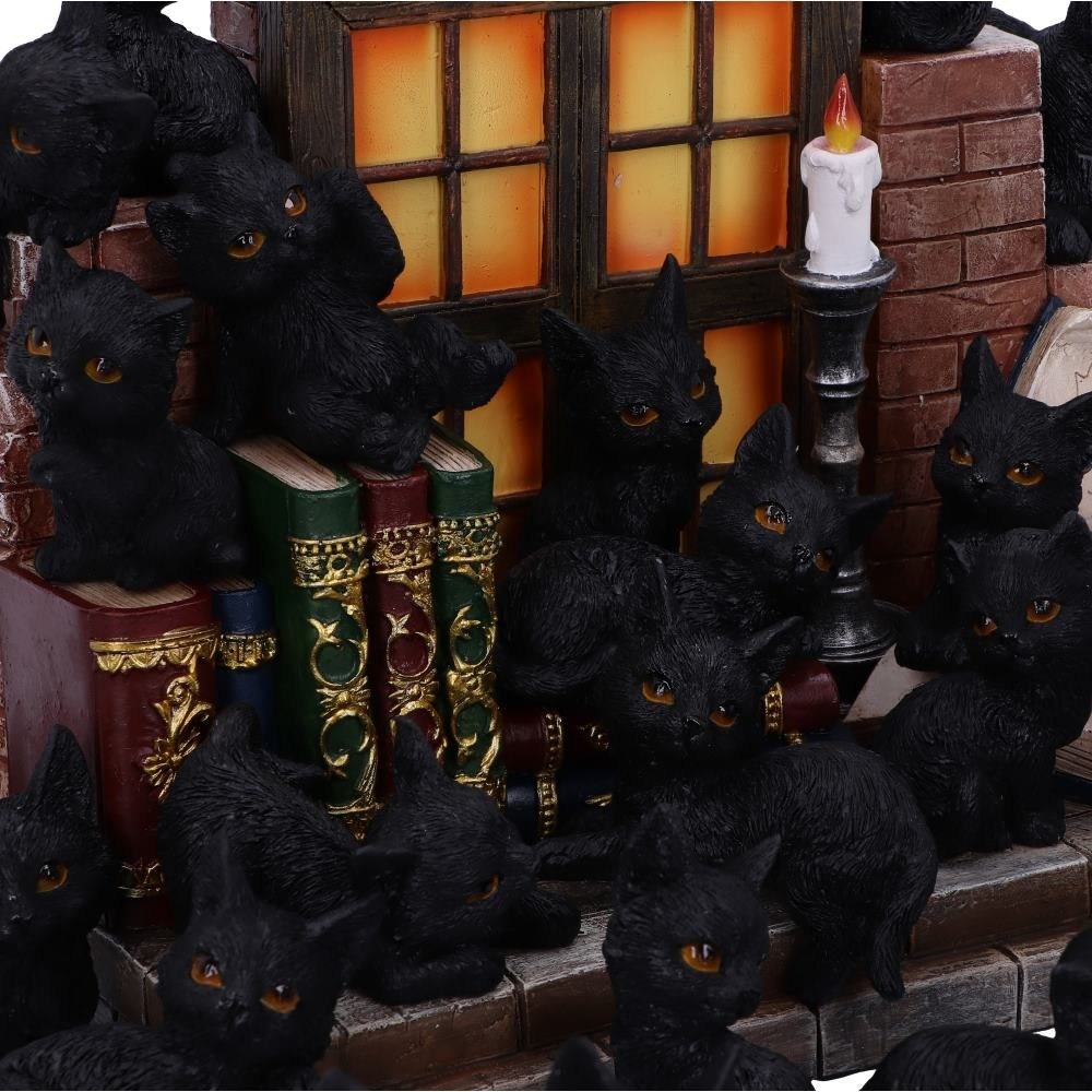 Witches Litter Display, with 36 cats
