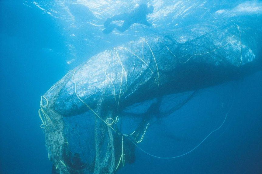What are ghost nets and how do they end up in our oceans? | Bombshell Bay Swimwear