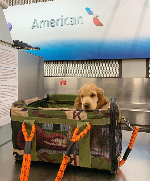 roverlund airline compliant pet carrier american airlines