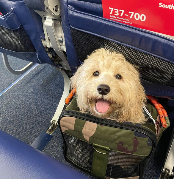 roverlund pet carrier southwest airlines
