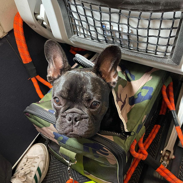 roverlund airline compliant pet carrier united airlines