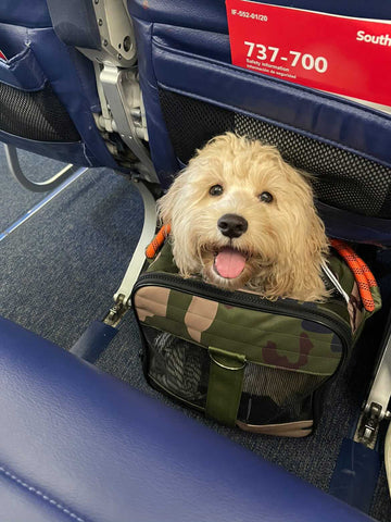 in cabin plane travel with dog