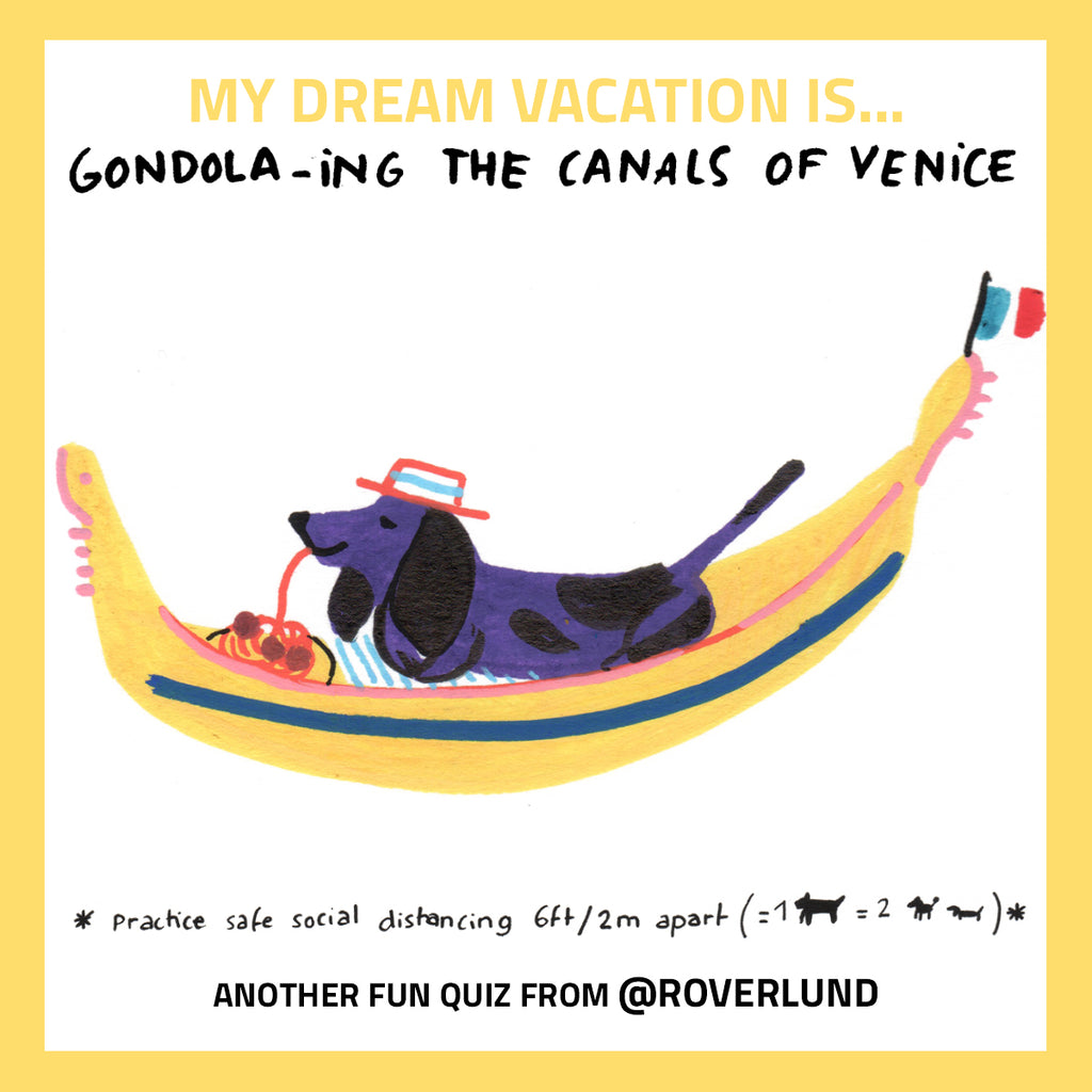 venice italy traveling with dog trips with dogs instagram 1