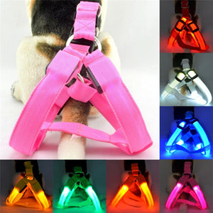 Luminous Dogs Harnesses
